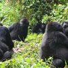 gorilla-safaris-and-tours-ltd