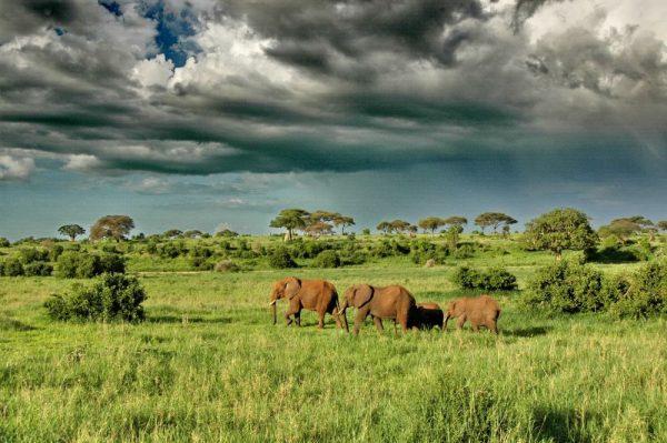 go to africa serengeti