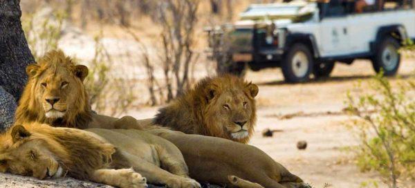 1075-1075_South-African-Safari-MAIN