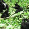 4-day-taste-of-rwanda