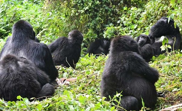 gorilla-safaris-and-tours-ltd