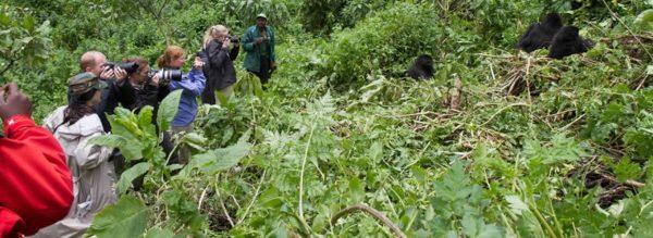gorilla-tour-africa