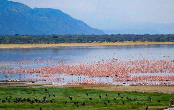 lake-manyara-1