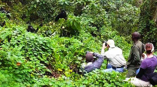 uganda-mountain-gorilla-trekking